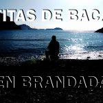 TARTITAS DE BACALO EN BRANDADA